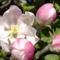 Tavasz 3