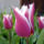Tavasz szépségei