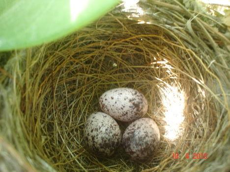 vajon milyen madárkákat rejt a tojás???