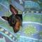 Alvin az én ágyikómban:)