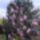 Fák,bokrok,virágok