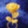 Balogné Bernáth Tünde virágai