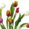 Tulipános háttérkép 12