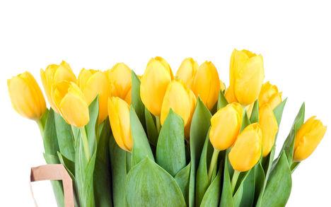 Tulipános háttérkép 17