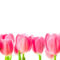 Tulipános háttérkép 1