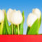 Tulipános háttérkép 20