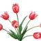 Tulipános háttérkép 23