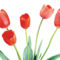Tulipános háttérkép 24