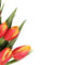 Tulipános háttérkép 27