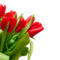 Tulipános háttérkép 28