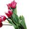 Tulipános háttérkép 30