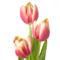 Tulipános háttérkép 34