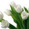 Tulipános háttérkép 38