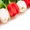 Tulipános háttérkép 40