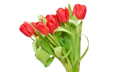 Tulipános háttérkép 6