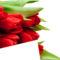 Tulipános háttérkép 7
