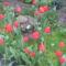 Nyárádmenti mezei és saját virágok ... 10