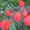 Nyárádmenti mezei és saját virágok ... 9
