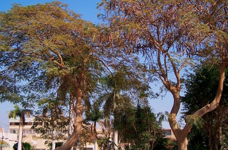 Egyiptom 2008 192