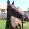 Szép lovakKis csikó 004