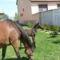Szép lovakKis csikó 005