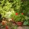 Csodaszép májust kívánva: Edith