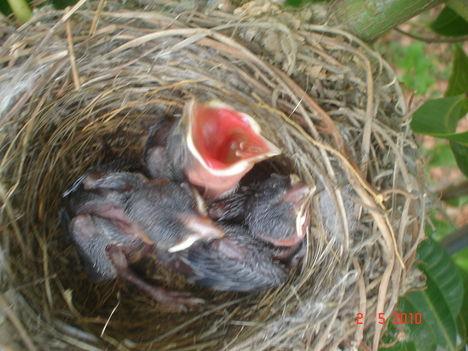 madárkák 008
