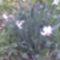 Virágzik a nárcisz!