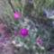 Virágzik a százszorszép!