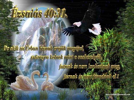 Ézsaiás 40-31.