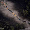 Latin American Aerials, Brahmn Cattle, Lago Ypoa National Park