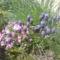 Szerény kis virágaim a ház előtt
