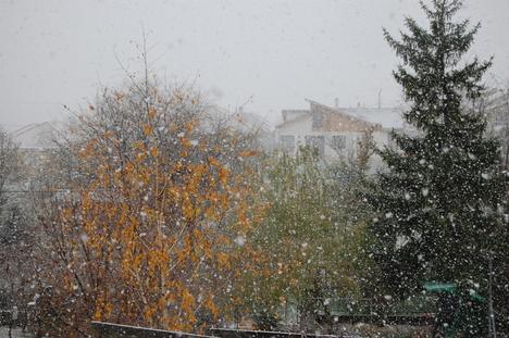 Villabarát az első hóesésben 1.