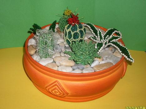 kaktusz tál