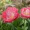 tavaszi képeink 009
