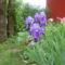 tavaszi képeink 012