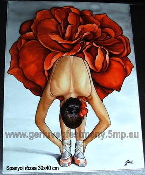 Spanyol rózsa