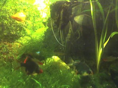 akvárium1