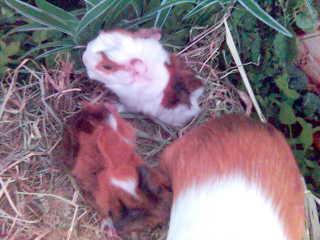 állataim 1