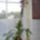 Dendrobium-004_714656_67624_t