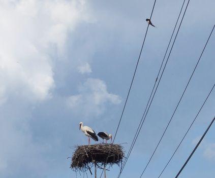 A gólyáink2