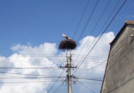 A gólyáink3