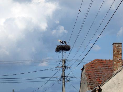 A gólyáink