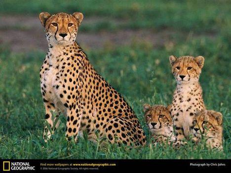 állati családok 4