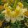 Rhododendronok virágzása - Jeli Arborétum - 2010.05.09.