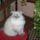 perzsa tabby másfél éves 5