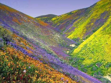 ...IIyen hegyeken megyek felfelé, hogy leszedjem a pompás virágokat
