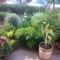 Kiskertem virágai