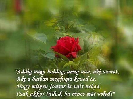 Addig vagy boldog idézet, rózsa háttér