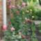 Édesanyám kertje